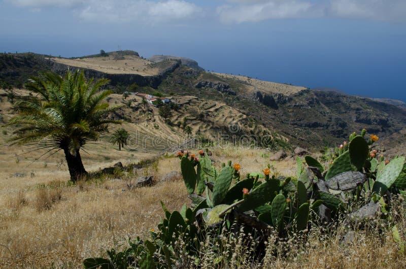 环境美化与在前景和加那利群岛枣椰子菲尼斯canariensis的pricky梨植物仙人掌最大值从后面 免版税库存图片