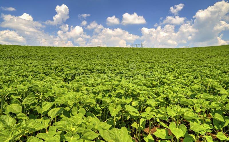 环境美化与在绿色领域的高压电子架空线 图库摄影