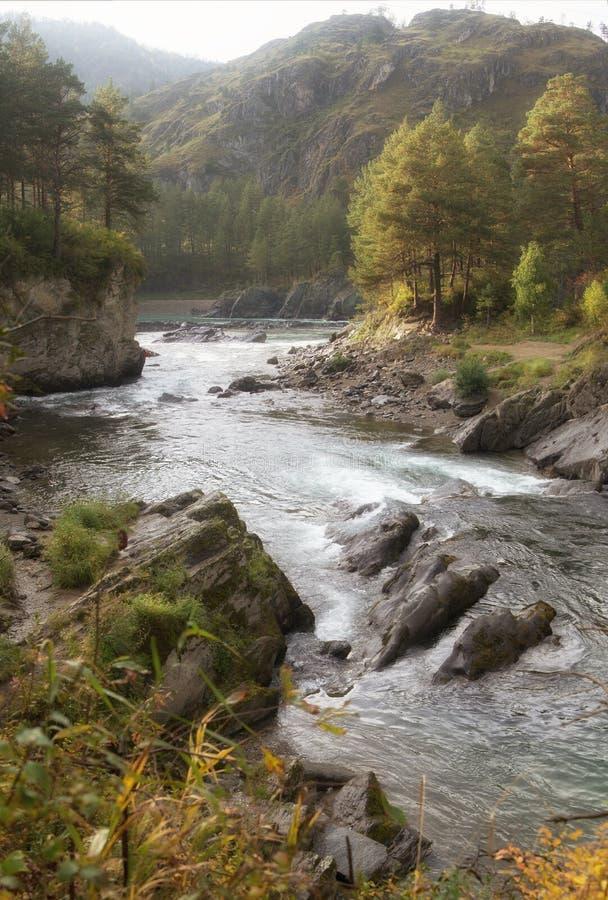 环境美化与快速的沸腾称在用森林盖的岩石岸中的Dragon的河Chemal和急流Claws 免版税库存图片