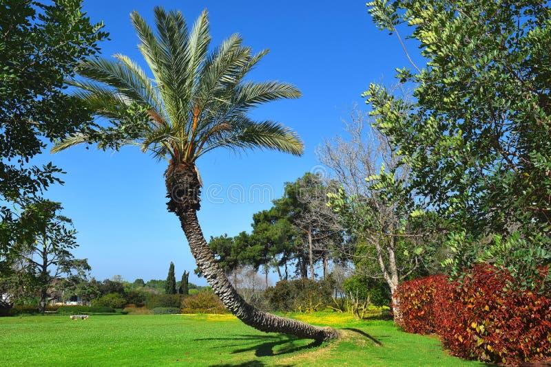 环境美化与棕榈树在公园拉马特甘Hanadiv,以色列 免版税库存图片