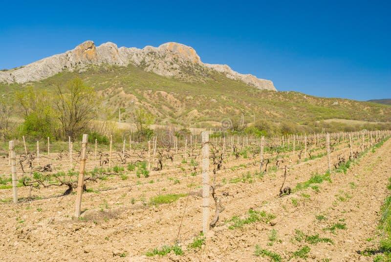 环境美化与葡萄园在克里米亚半岛山的Taraktash范围附近 库存图片