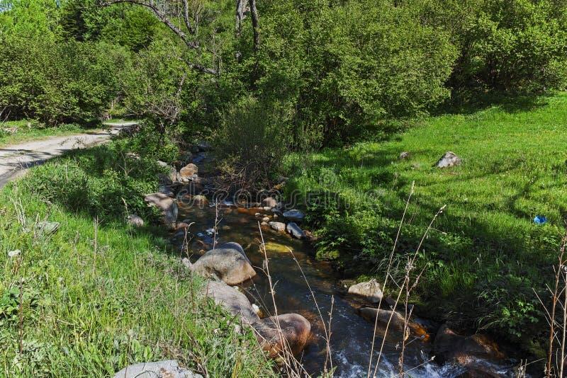 环境美化与青山在Fotinovo附近村庄在Rhodopes山,保加利亚的 库存图片