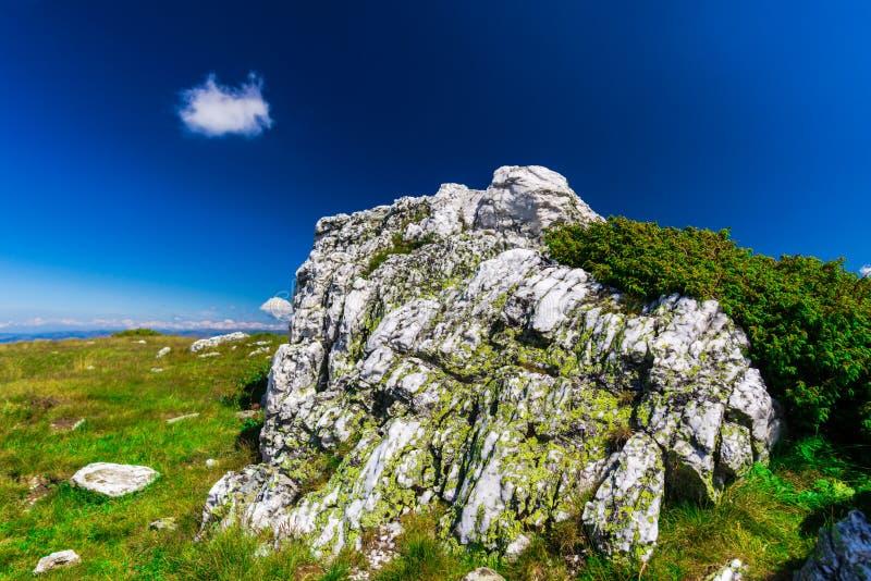 环境美化在喀尔巴阡山脉, parang山,罗马尼亚 免版税库存图片