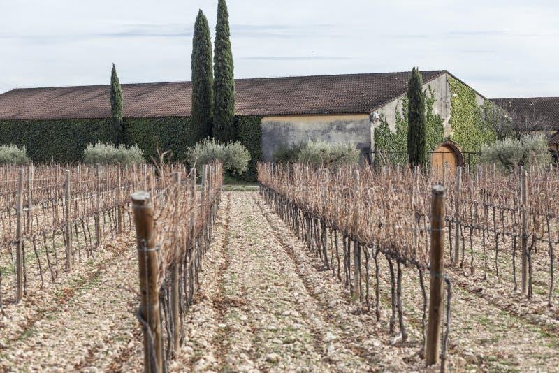 环境美化在Penedes酒区域,卡塔龙尼亚,西班牙 库存照片