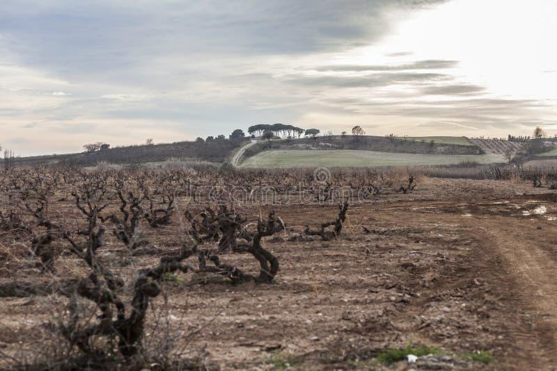 环境美化在Penedes酒区域,卡塔龙尼亚,西班牙 图库摄影