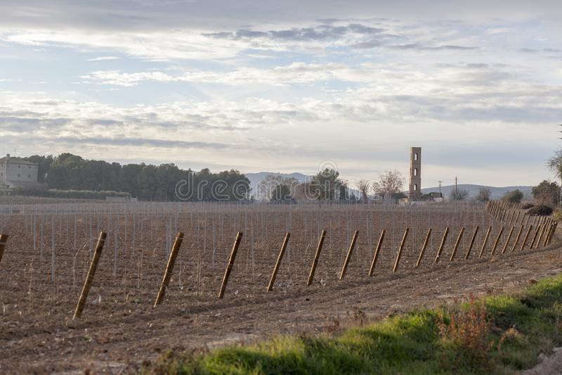 环境美化在Penedes酒区域,卡塔龙尼亚,西班牙 免版税库存图片