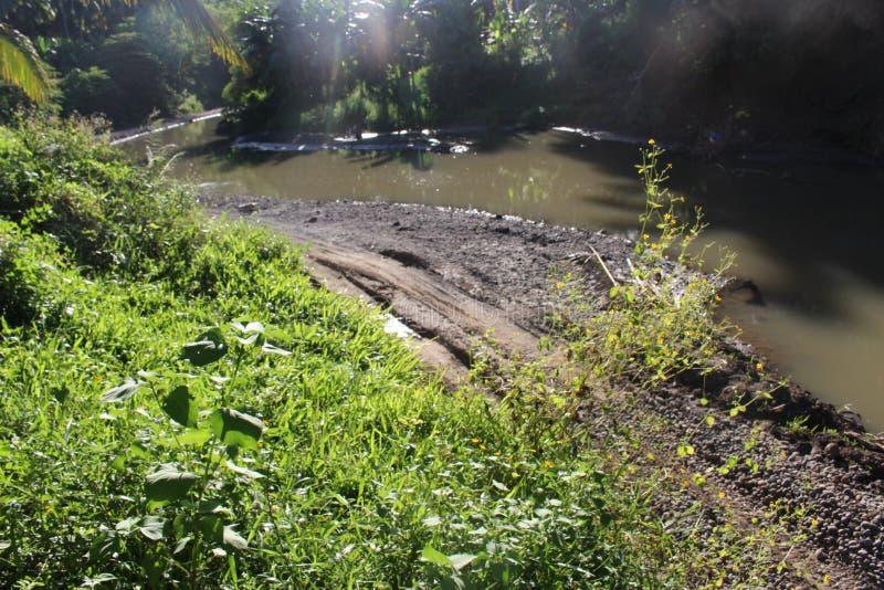 环境自然秀丽  免版税库存图片