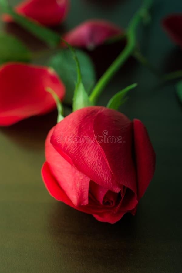环境花玫瑰黄色 免版税图库摄影
