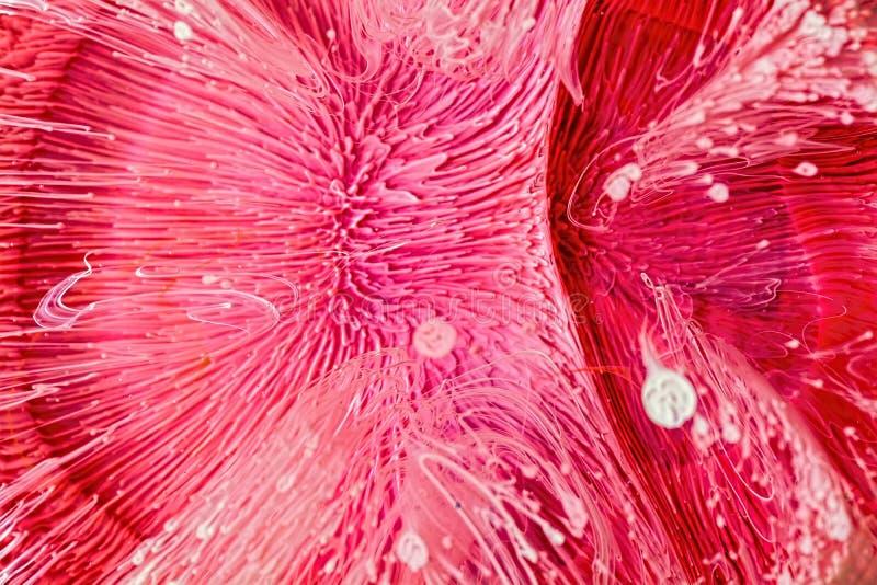 环氧树脂培养皿艺术大镜头,红色摘要 免版税库存照片