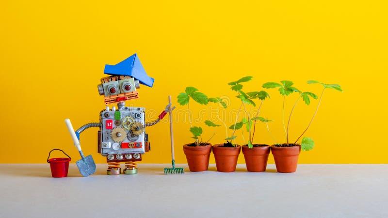 现代农业机器人从事园艺的技术 机器人有桶铁锹犁耙和新芽的花匠交配动物者狂放 库存图片