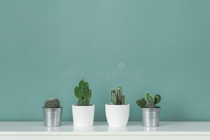 现代室装饰 各种各样的盆的仙人掌房子植物的汇集白色架子的反对淡色绿松石上色了墙壁 免版税库存图片