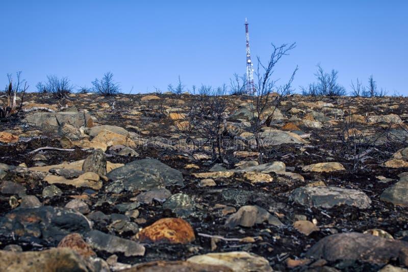 现代电信塔和死于森林 库存图片