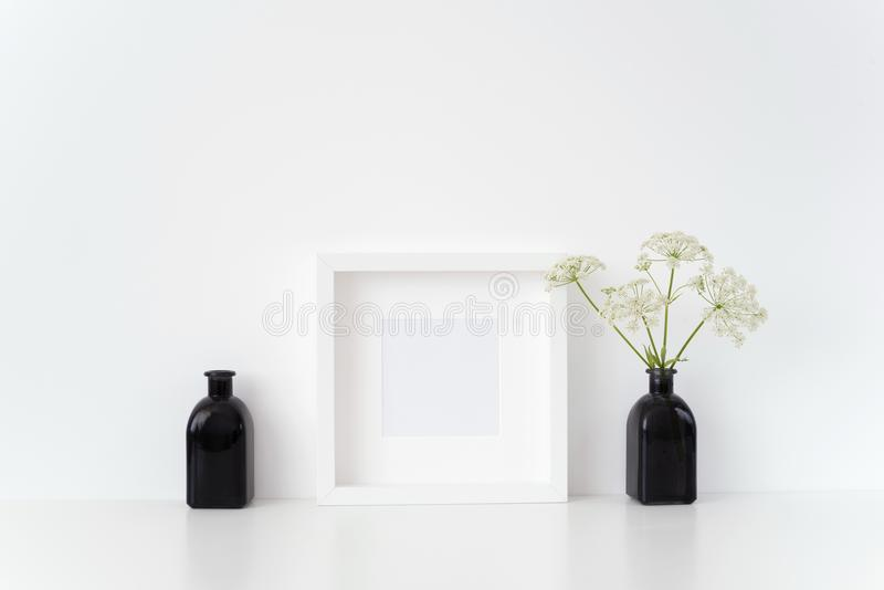 现代白方块框架嘲笑与在黑花瓶的一堆主教杂草在白色背景 行情的,促进大模型 免版税库存照片