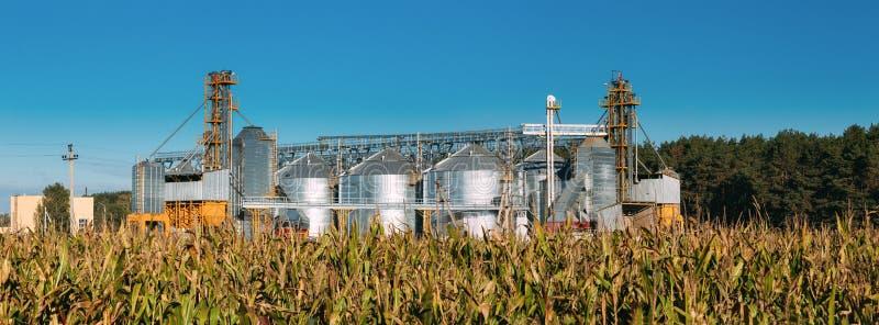 现代粮仓、五谷干燥复合体、商业五谷或者种子筒仓在晴朗的夏天农村风景 图库摄影