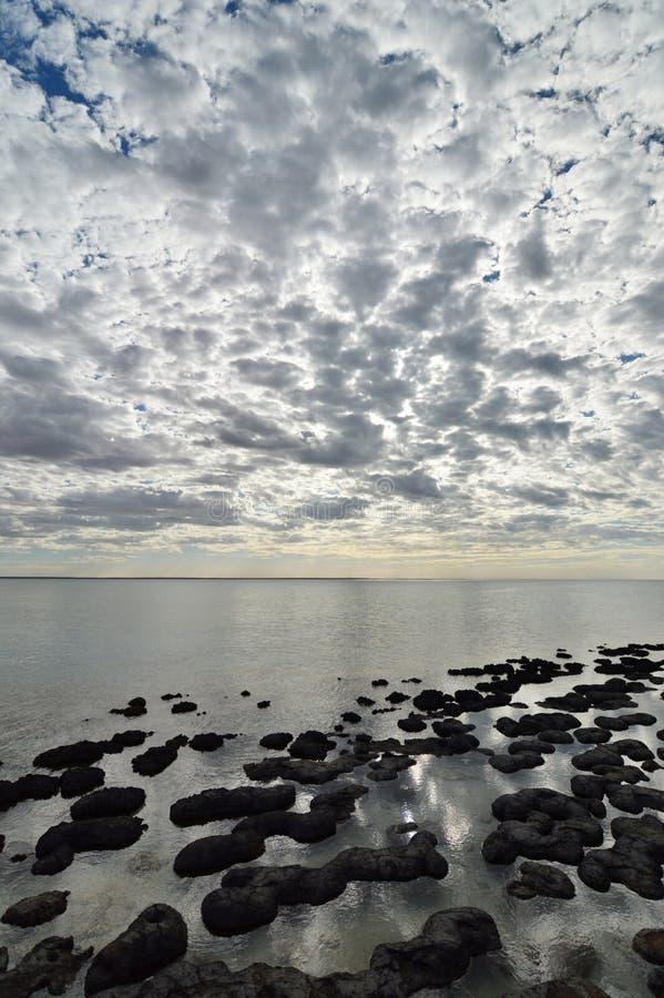 现代stromatolites在哈默尔恩合并海洋自然保护 Gascoyne地区 澳大利亚西部 库存图片