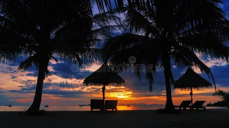 现出轮廓与躺椅的可可椰子树在热带海滩 免版税库存照片