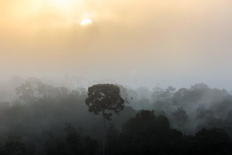 现出轮廓在有雾的谷前面的与太阳上升的树和Forrest在多云天空背景中 免版税库存图片