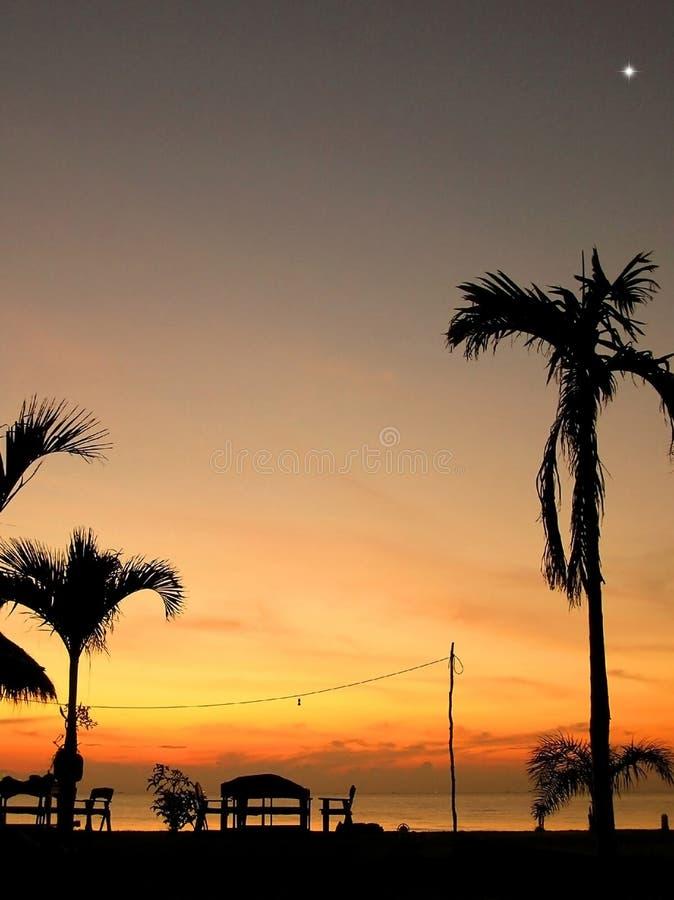 现出轮廓在海滩的可可椰子树在日落 热带 免版税库存图片