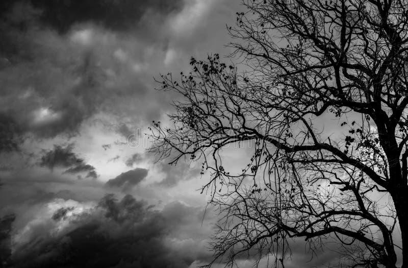 现出轮廓在黑暗的剧烈的天空背景的死的树可怕或死亡的 容易编辑万圣节图象晚上导航 绝望,绝望和哀叹概念 免版税库存照片
