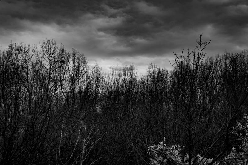 现出轮廓在黑暗的剧烈的灰色天空的死的树并且覆盖可怕,死亡和和平概念的背景 在树的蜻蜓 库存图片