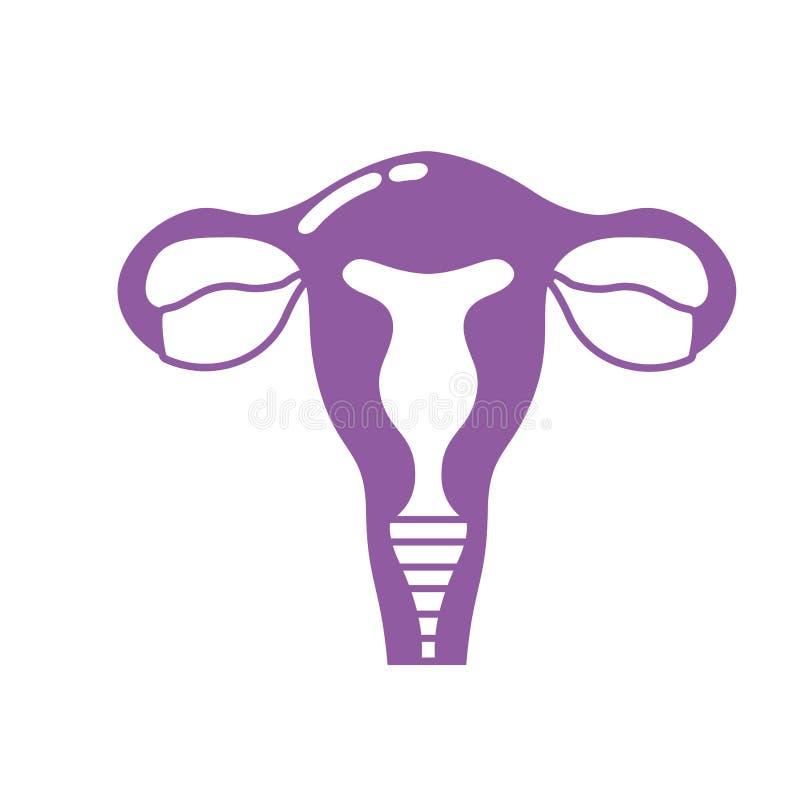 现出轮廓有子宫的输卵管对人的解剖学 库存例证