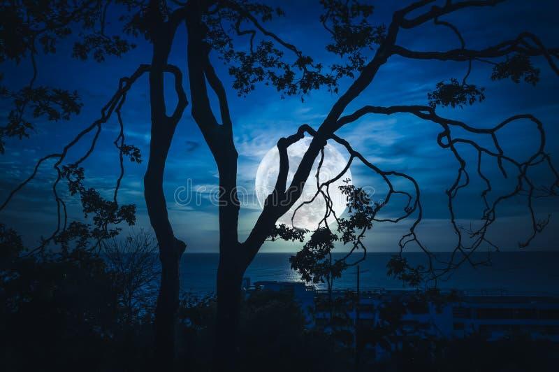现出轮廓树分支反对天空和满月在海上 向量例证