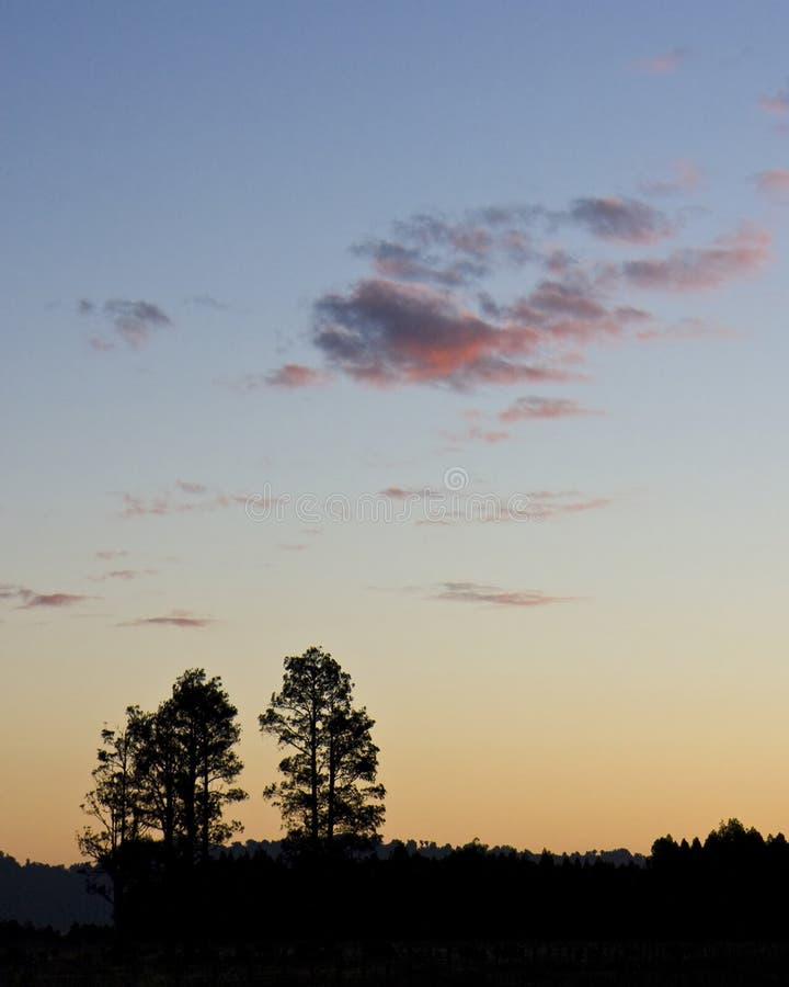 现出轮廓的日落结构树二 免版税库存照片