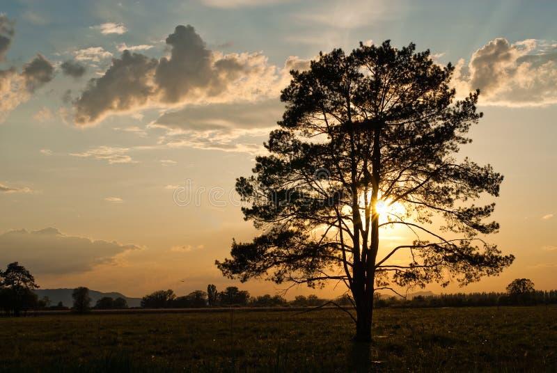 现出轮廓的日落结构树 免版税库存图片