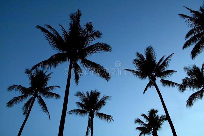 现出轮廓的棕榈树 库存照片