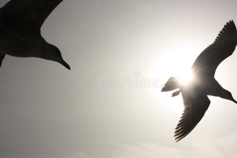 现出轮廓的鸟飞行 免版税库存照片