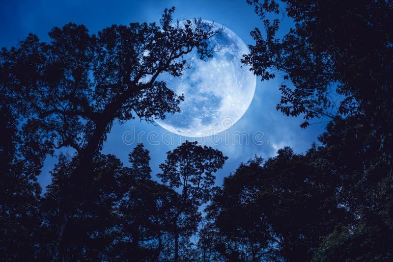 现出轮廓树分支反对与满月的蓝天 免版税图库摄影