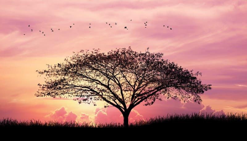 现出轮廓树和草和鸟在桃红色紫色天空云彩背景中 免版税库存照片