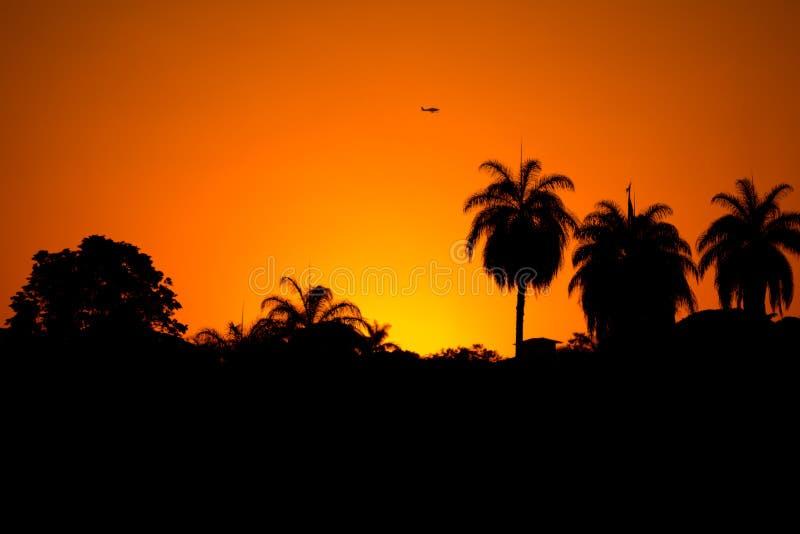 现出轮廓棕榈树 免版税图库摄影
