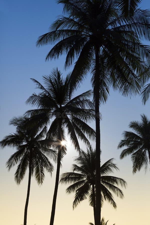 现出轮廓椰子树 库存照片