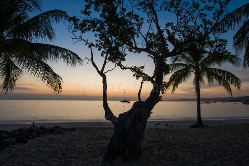 现出轮廓的棕榈树在牙买加 免版税库存图片
