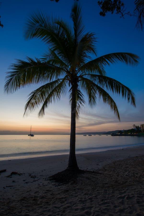 现出轮廓的棕榈树在牙买加 库存照片