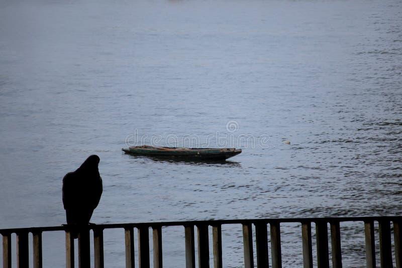 现出轮廓看tha小船的鸟 免版税库存图片