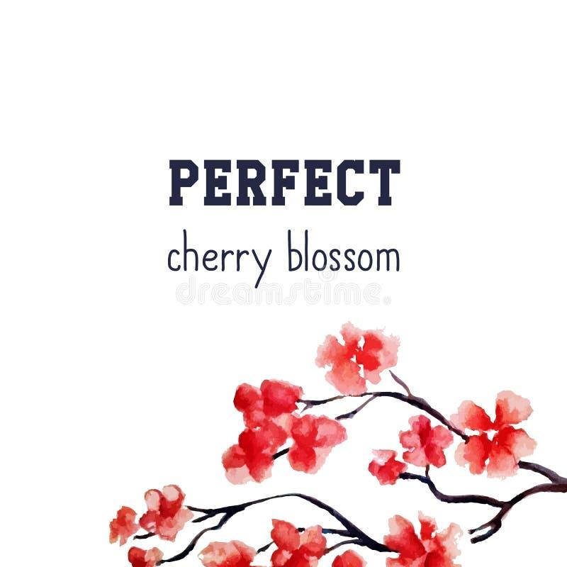 现实佐仓开花-在白色背景隔绝的日本红色樱桃树 传染媒介水彩绘画 剪报 向量例证