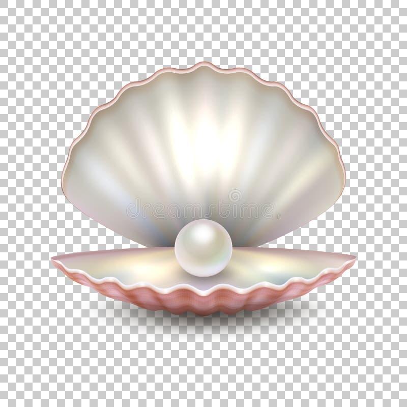 现实在透明背景隔绝的传染媒介美丽的自然公海珍珠壳特写镜头 构思设计餐馆模板 向量例证