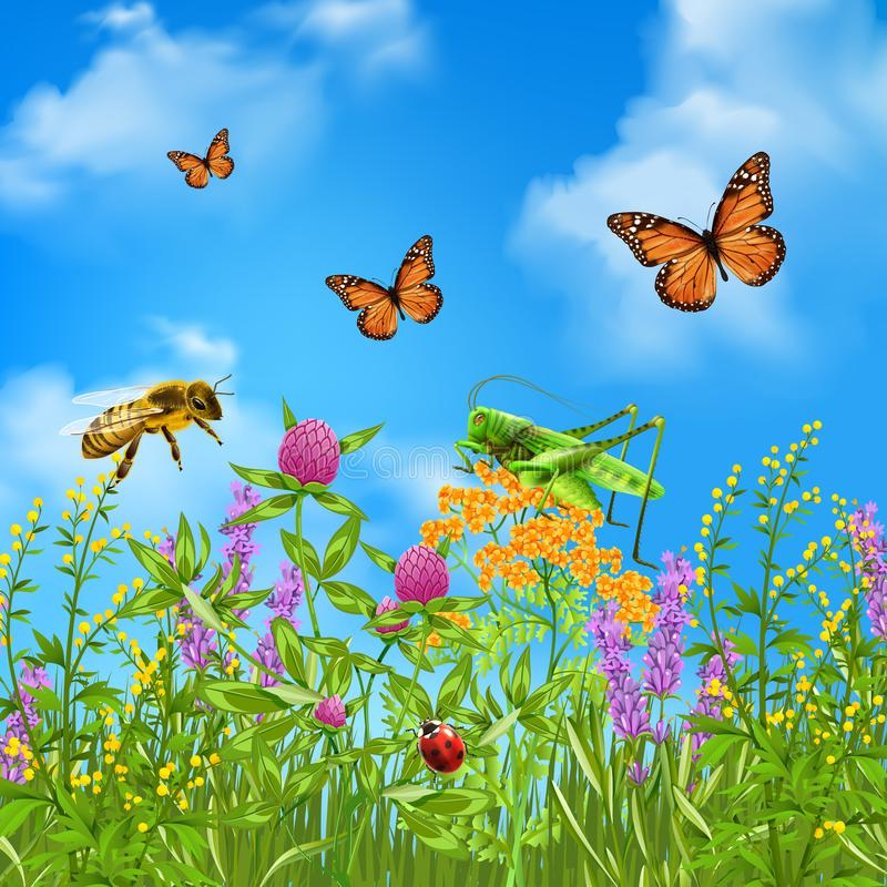 现实夏天的昆虫 向量例证