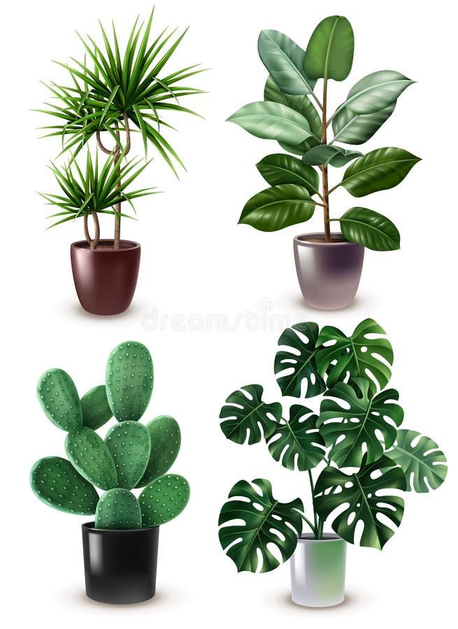 现实室内植物象集合 向量例证