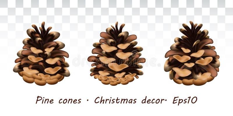 现实杉木锥体集合 与现实植物的杉木锥体的模板 邀请的想法,招呼明信片,标签,贴纸 向量例证