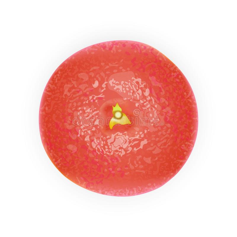 现实桃红色3d葡萄柚 顶视图 详细的3D例证 向量例证