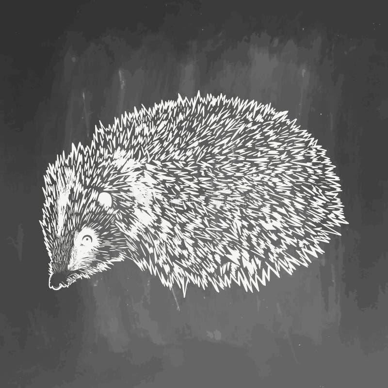 现实猬在黑板淹没 在黑板的例证 动物剪影 10 eps 画动物为 向量例证