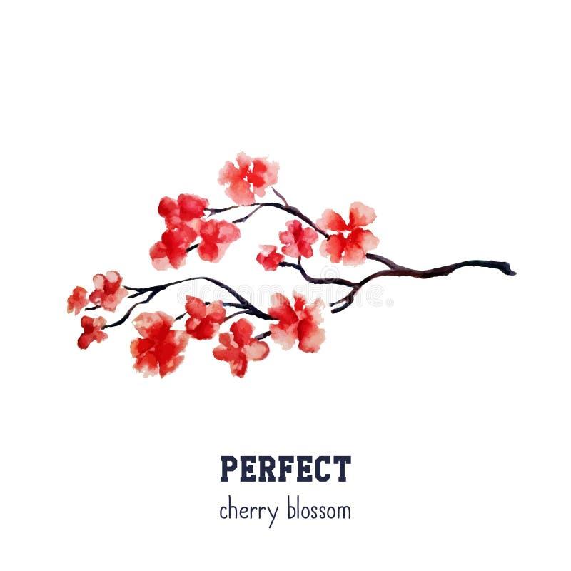 现实红色佐仓开花-在白色背景隔绝的日本红色樱桃树 向量例证