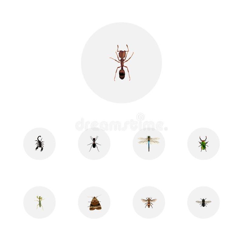 现实蚂蚁、蚂蚁、黄蜂和其他传染媒介元素 套昆虫现实标志并且包括甲虫,蜻蜓 向量例证