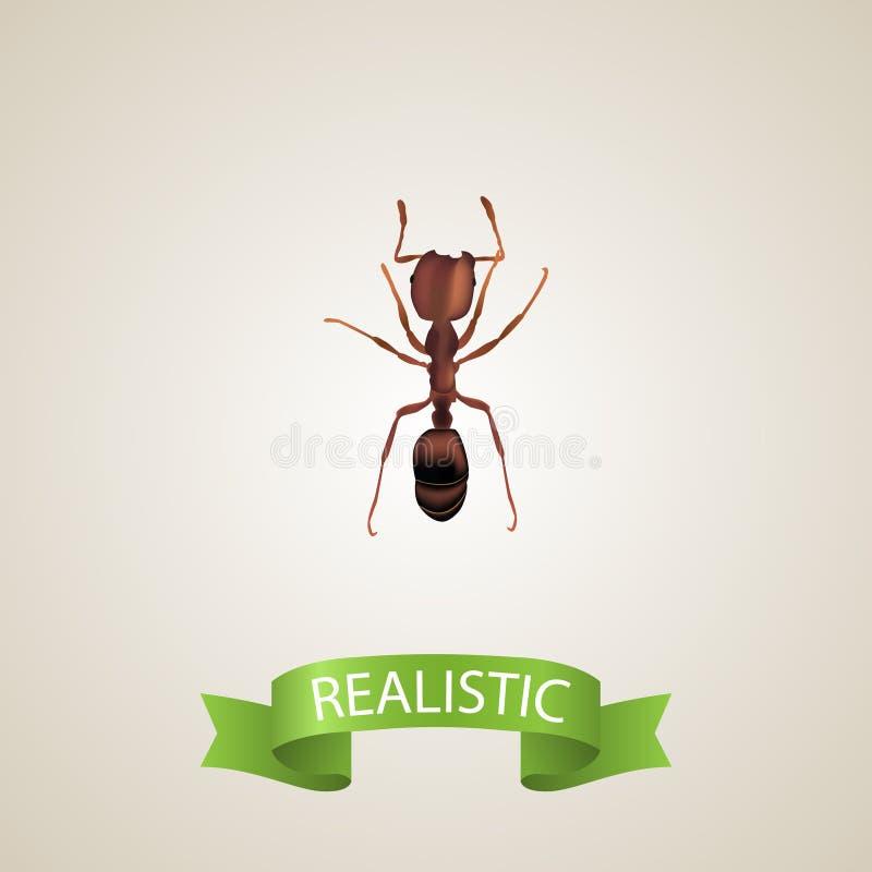 现实蚂蚁元素 在干净的背景隔绝的现实蚂蚁的传染媒介例证 能使用作为蚂蚁,蚂蚁 库存例证
