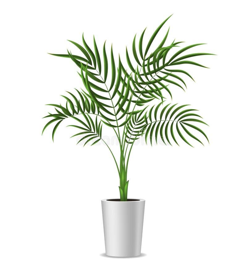 现实详细的3d盆的绿色热带棕榈树 向量 向量例证