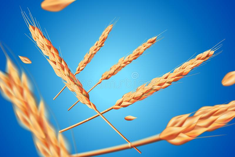 现实麦子燕麦元素 在健康食品或农业设计的蓝色背景隔绝的飞行的详细的大麦 库存例证
