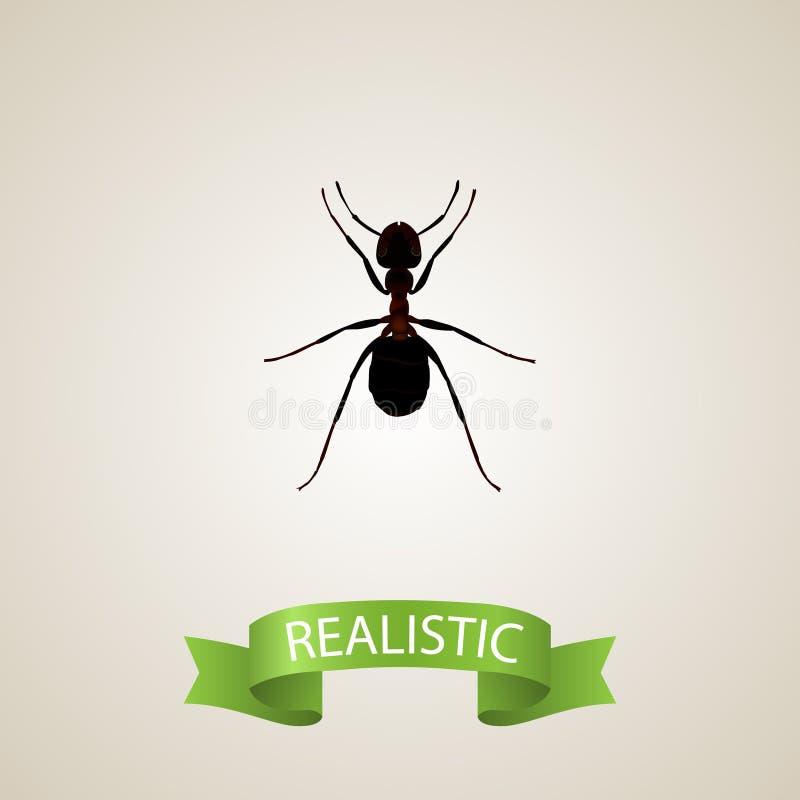 现实Pismire元素 在干净的背景隔绝的现实蚂蚁的传染媒介例证 能使用作为Pismire 向量例证